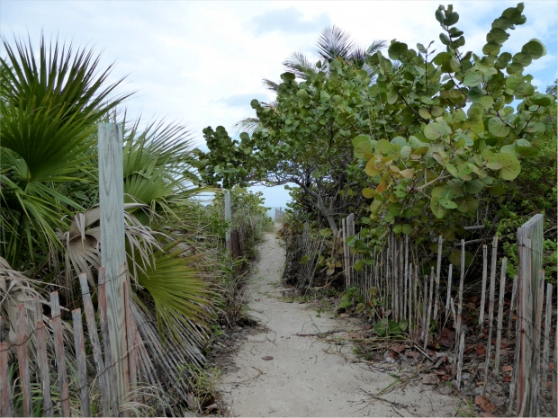 Path leading to beach from Osprey trail, Jan 2016