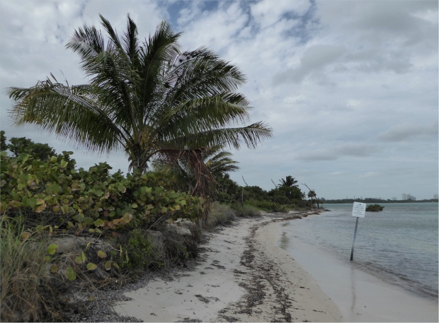 Restricted section of beach where fossil reef is, Jan 2016